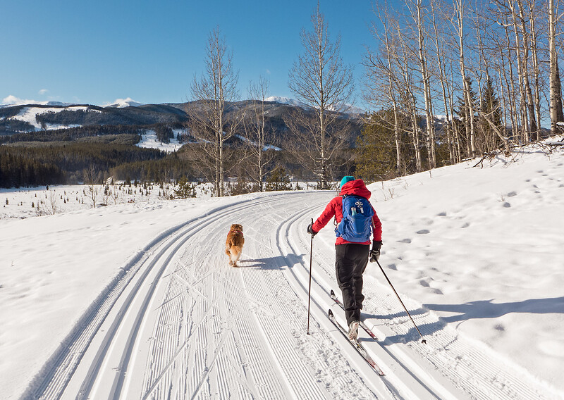 Moose loop in great shape as well. Piper the retriever was happy to get out for a ski, after a bit of a hiatus while we skied less dog-friendly areas elsewhere.