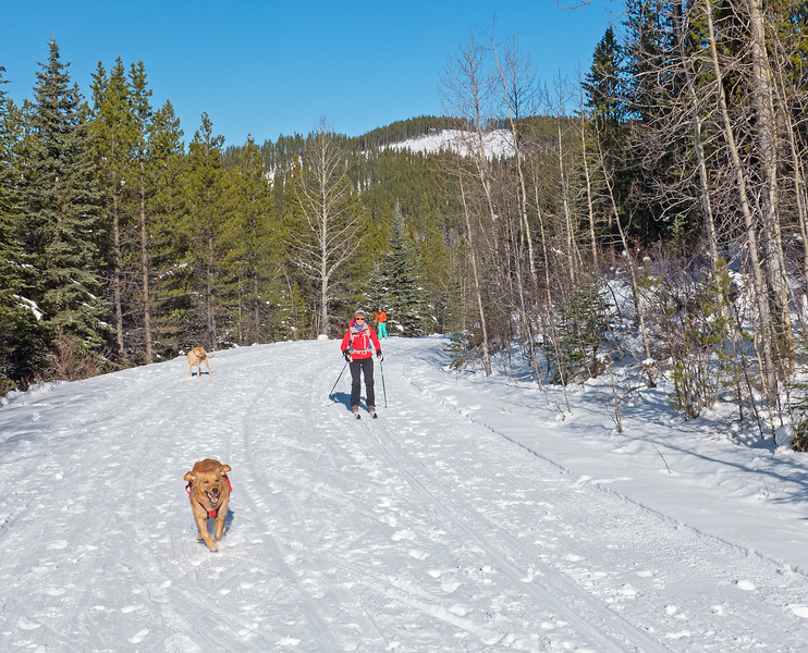 West Bragg is for dogs.  And...everybody else from hikers to snowshoers to fat bikers! Mountain Road beyond the Moose Connector junction had the best skiing of the day,  with smooth grooming and decent fast tracks.