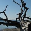 TreeWarriorLandscape_square_resize