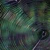 364_Spiderweb