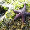 12_Starfish