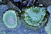 226_Emerald