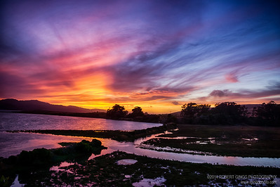 Tomales Bay Marsh