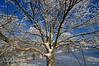 Winter, Bald Knob