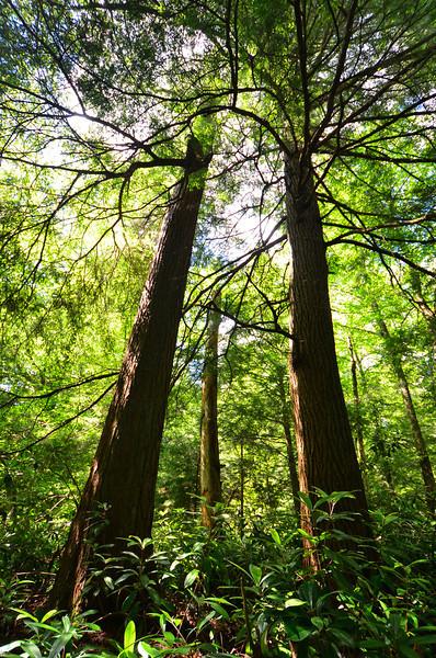 Shavers Mountain Spruce-Hemlock Stand, WV