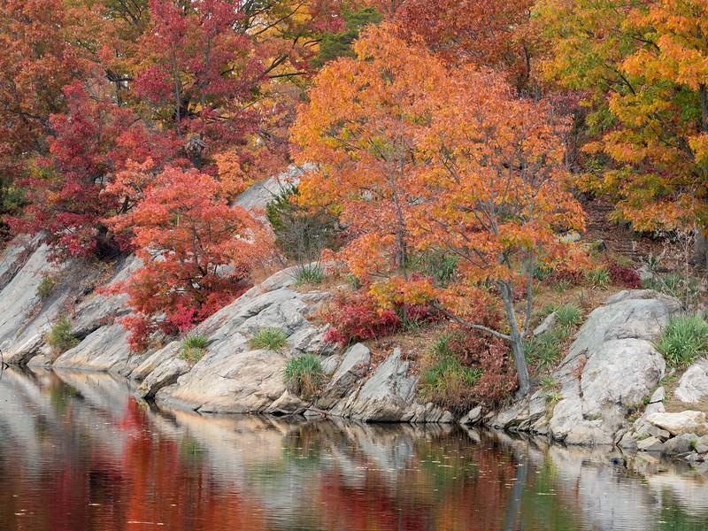 Fall at Bruce Park