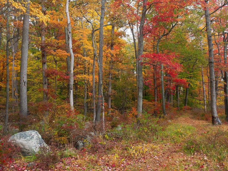 Fall at Silver Lake