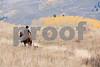 Rancher rides horse