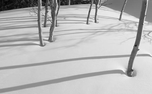 Wasatch Aspens 3 / Snowbird, Utah