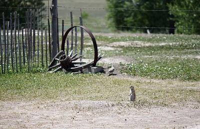 Prairie Dog and Wagon Wheel