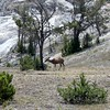 Mammoth Hot Springs V