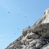 Mammoth Hot Springs I