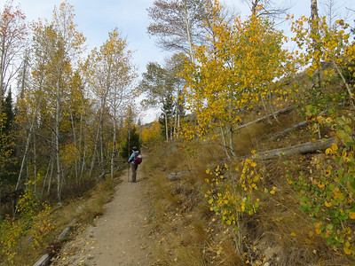 The trail gets rolling thru some lovely aspens that are starting to turn.