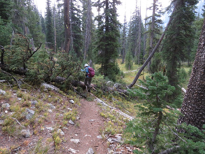 We would eventually get to, shall we say, the unmaintained part of the trail.  Lots of blowdowns and mud holes.  So we turned around.