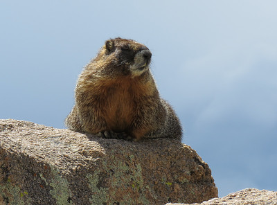 I think this marmot liked to have his photo taken.
