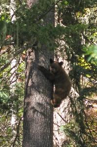 bear cub still.jpg