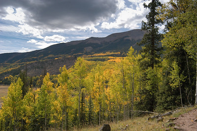 If you don't like the color yellow, don't hike up the Ute Creek trail at this time of year.
