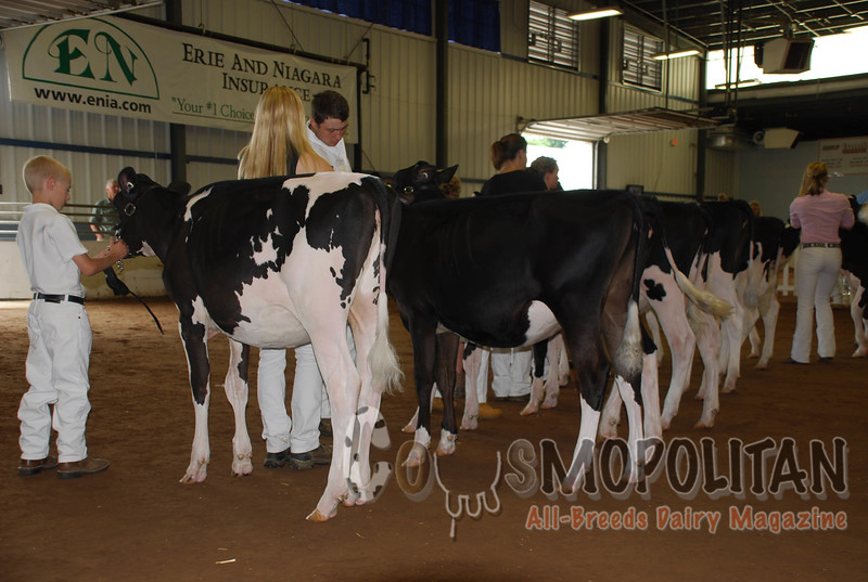 Western New York Holstein 2016