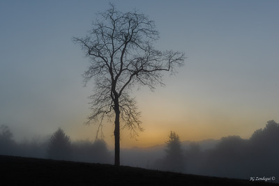 Leafless at Dawn with Fog 2