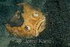 Whitemargin Stargazer (Uranoscopus sulphureus) - Lembeh Strait, Indonesia