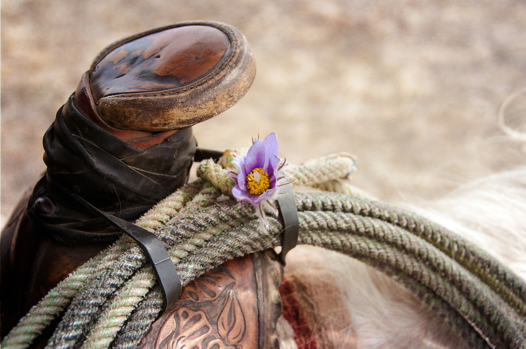 Saddle Crocus