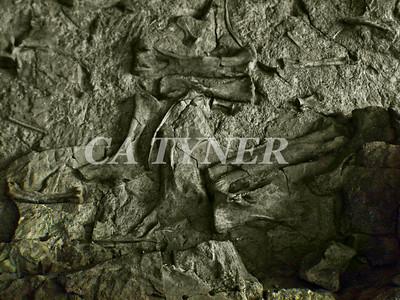 Dino Bones Dinosaur National Park  Utah