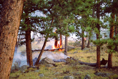 Controlled burn near Moraine Park, Rocky Mountain National Park, Colorado