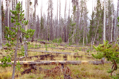 Enroute to West Thumb Geyser Basin, Yellowstone National Park (from South Entrance), Wyoming