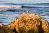 Pelicans at Sunrise on the California Coast