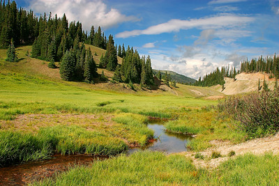 Meadow in Rocky Mountain National Park, Colorado