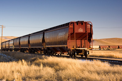 Grain Carrier Rail Cars