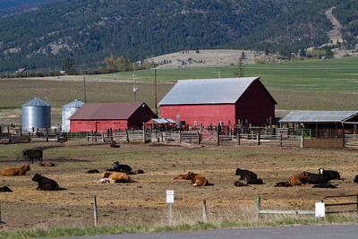 Montana Cattle Ranch, Bitterroot Mountains near Stevensville
