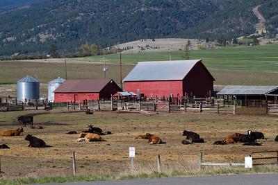 Montana Cattle Ranch, Bitterroot Mountains near Stevensville