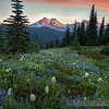 Paradise Wildflowers, Mount Rainier
