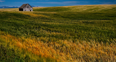 Farmhouse and Field