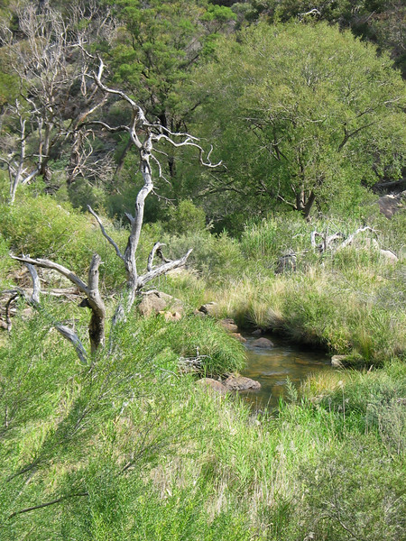Werribee River - Werribee Gorge
