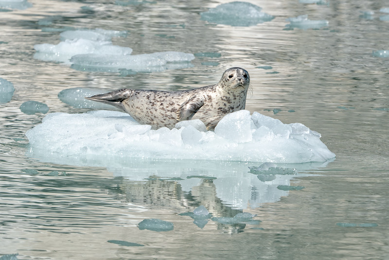 Harbor Seal Island
