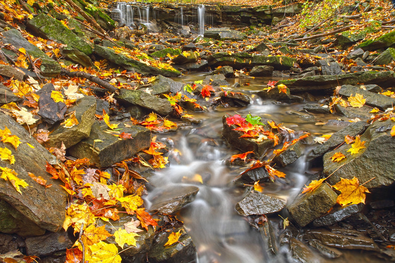"""""""TRICKLE OF FALL"""""""