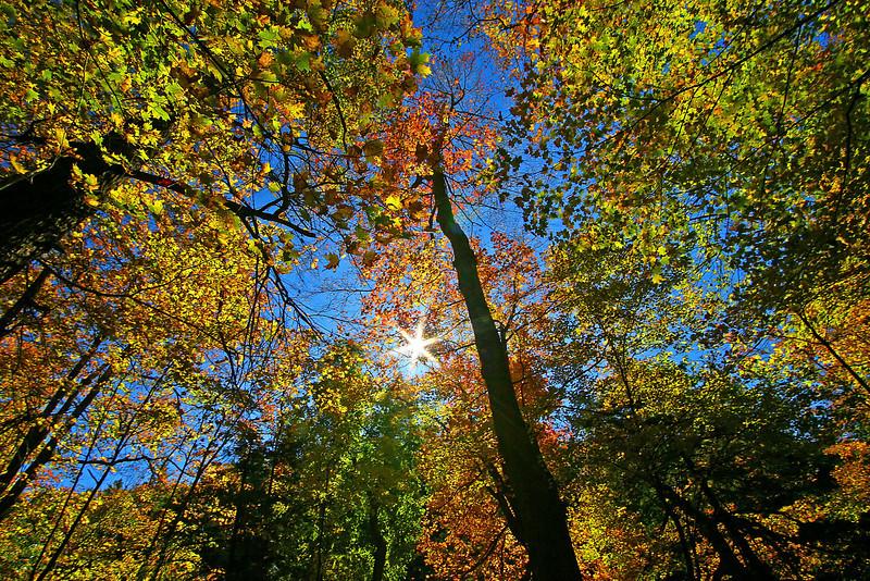 Image #539<br /> Autumn in Letchworth State Park, Western N. Y.