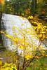 Image #8954<br /> Stony Brook State Park, Western N.Y.
