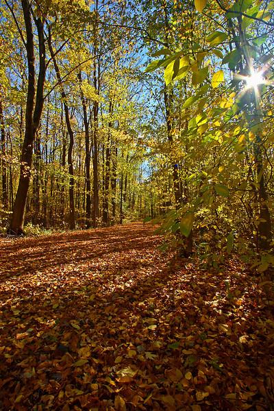 Image #3412<br /> Buckhorn State Park, Grand Island, Western N. Y.