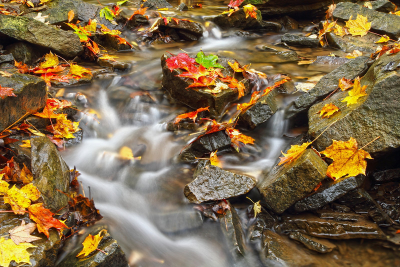 """AUTUMN BROOK"""