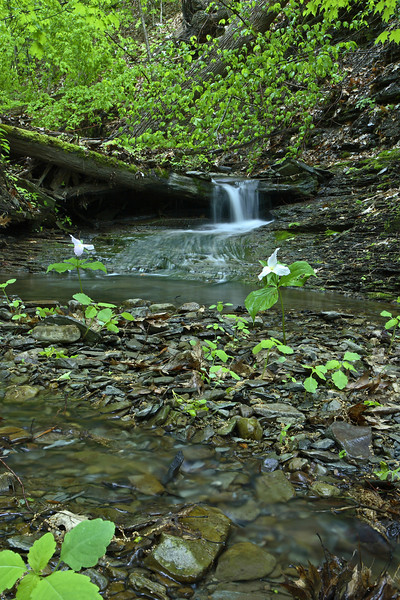 Image #7440<br /> A small creek in Letchworth State Park, Western N. Y.