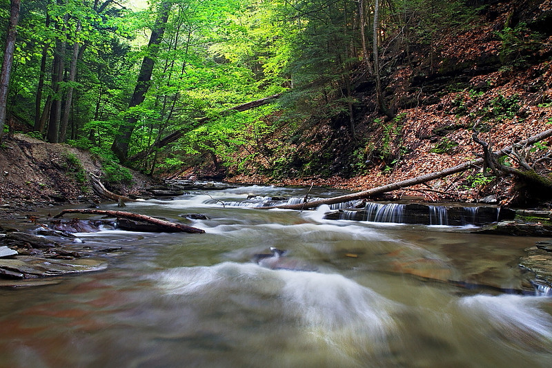 Image #6182<br /> Grimes Glen, Central N. Y.