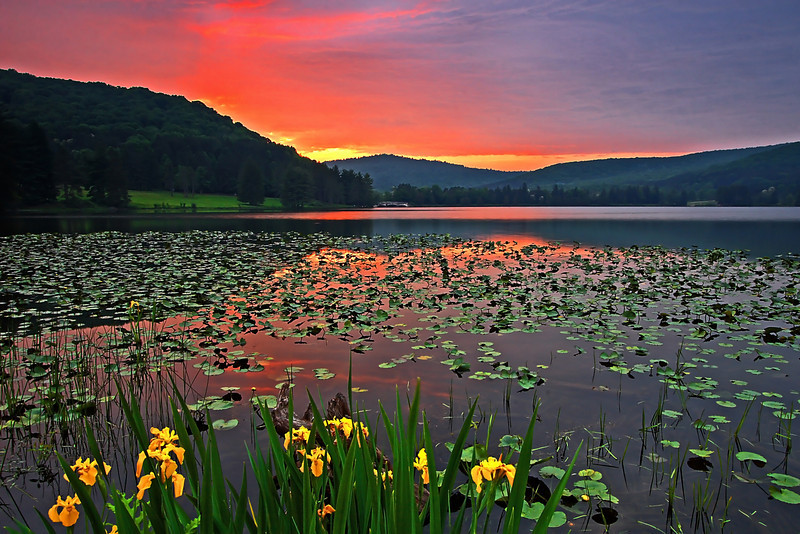 """LILIES of the SUNSET"""