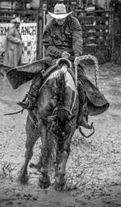 Muddy Bronc Rider