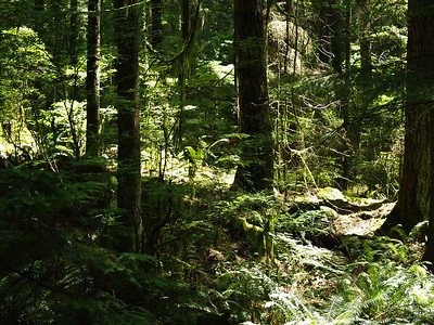The bright sun really contrasts with the dark green coolness of the forest (2006).
