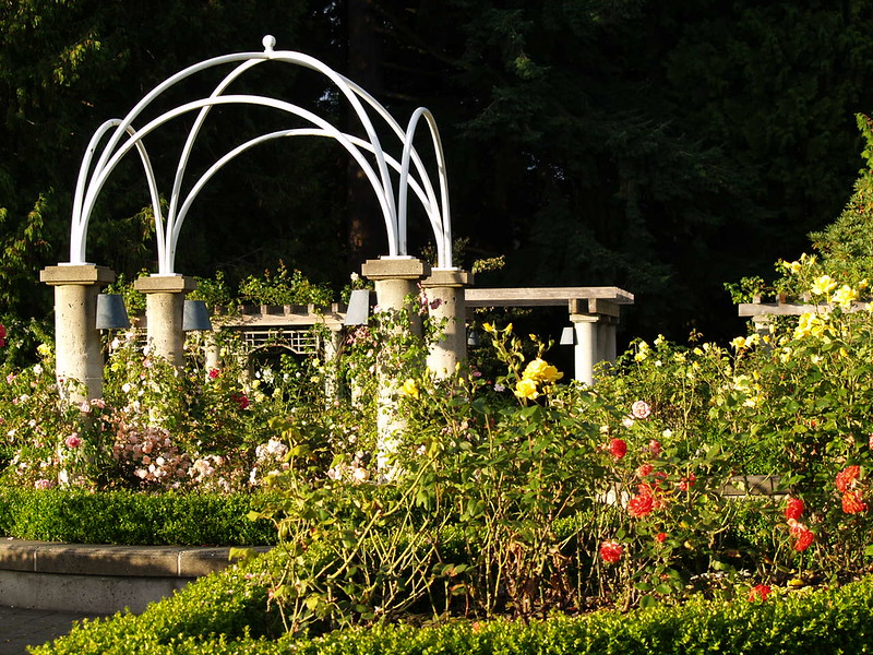 The Rose Garden at the University of British Columbia is a popular place to watch the sunset. In the bright light, the color of the roses is brilliant. This is also a popular place for location shoots (2006).