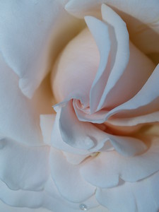 From the University of British Columbia's Rose Garden.