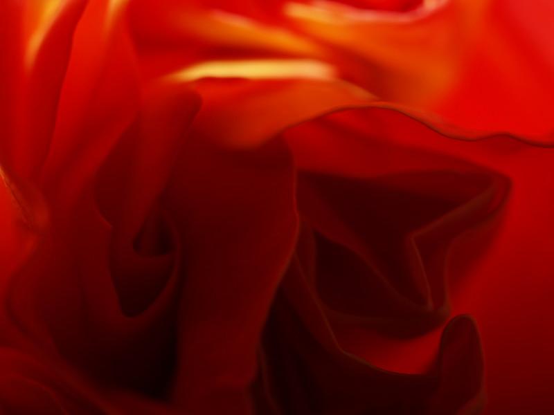 Rose Garden 057.JPG